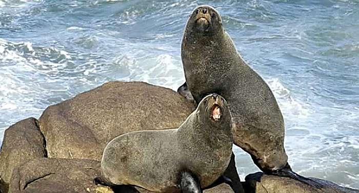 9 Tipos de osos marinos