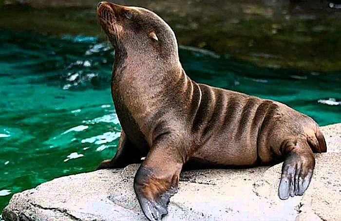 Tipos de osos marinos : 9 especies