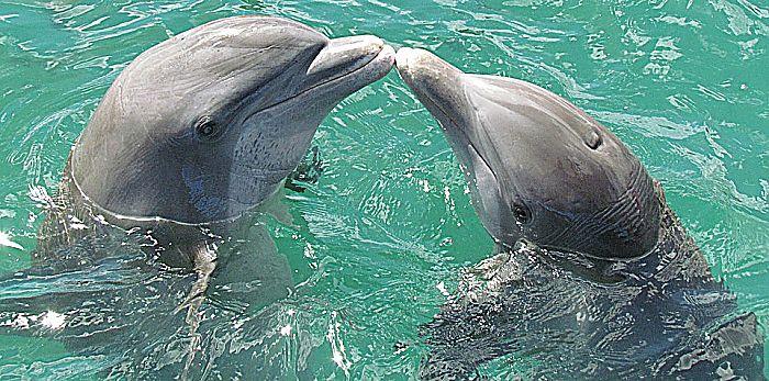 7 Tipos de los delfines más comunes
