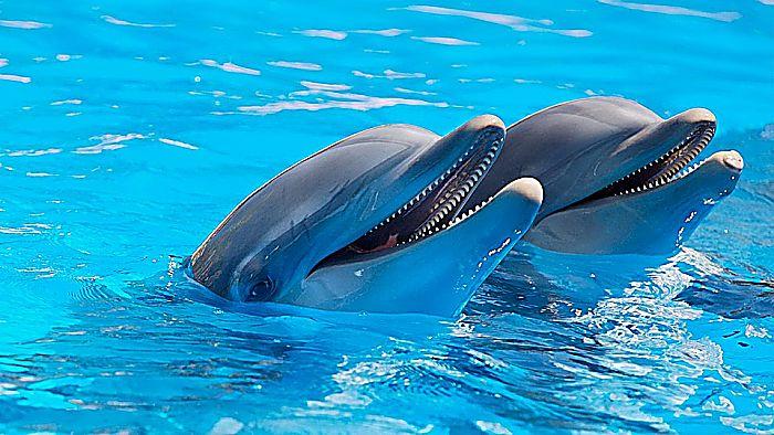 Tipos de delfines : Especies más comunes